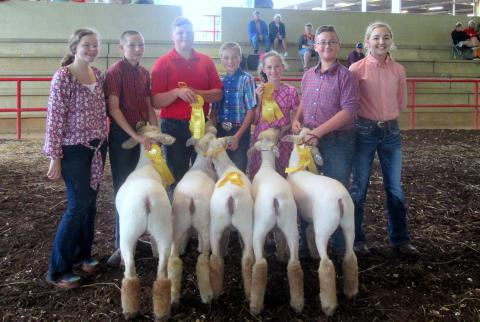 Union County group-of-five at the Eastern Region Sheep Expo - L to R: Summer Beeler, Jeremiah Tindell, James Smith, Jonathon Tindell, Gracie Tindell, Caden Walker, and Savannah Jones