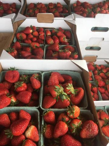 Thompson Farms fresh strawberries