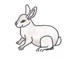 Hopping Bunny Rabbit