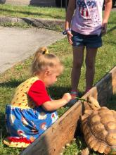 A young Summer Reader feeds a tortoise at the Healthy Kids Day kickoff at Maynardville Public Library.