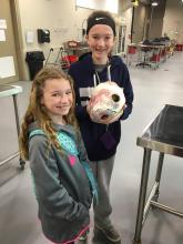 Kaylee Venable and Kelsey Holt examine a plastinated cow heart from LMU's anatomy lab.